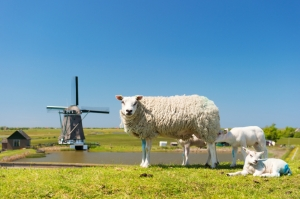 Typical products from Texel
