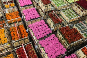popular Dutch exports