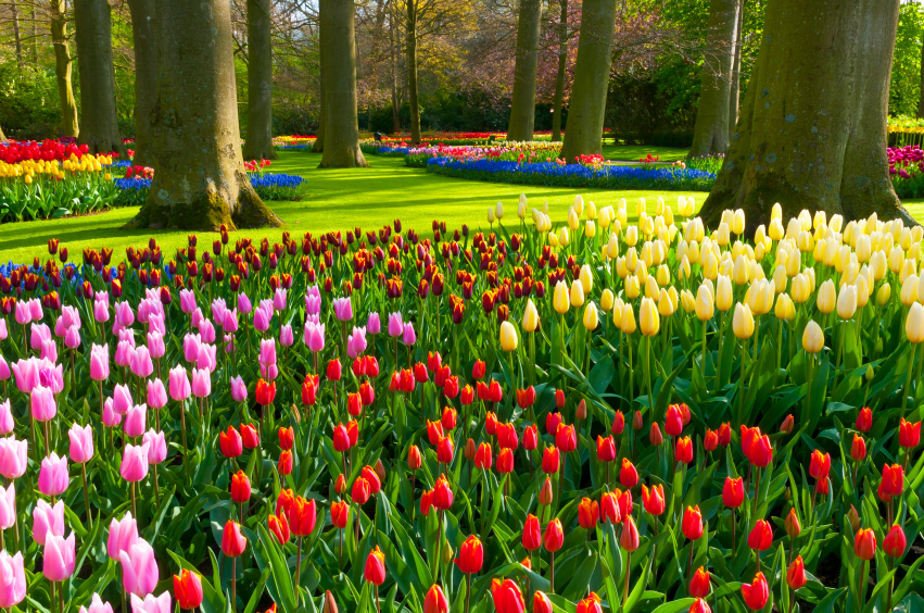 The Keukenhof The Ultimate Way To Experience Spring In
